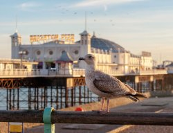 5 raisons d'aller à Brighton